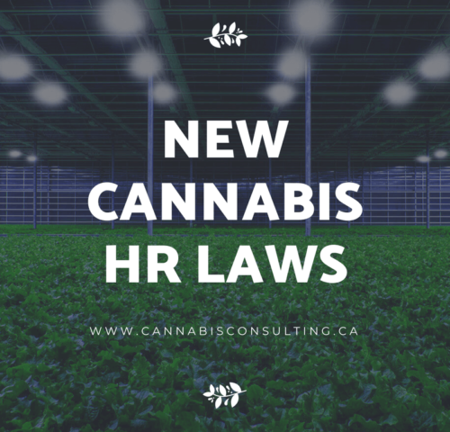 New Cannabis HR Laws